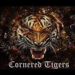 Cornered Tigers